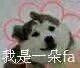 QQ图片20180617170054.jpg